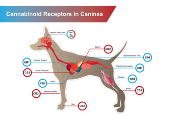 Cannabinoid receptors in Canines and CB1 and CB2 work.