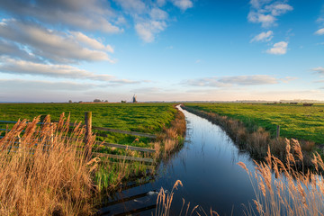 Wall Mural - Looking out to Halvergate Mill on Berney Marshes