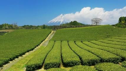 Wall Mural - Green tea plantations and fuji mountain in Shizuoka, Japan.