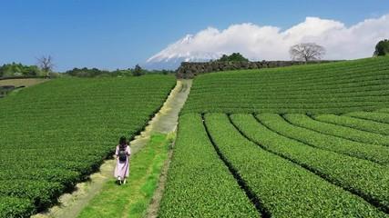 Wall Mural - Young woman walking in Green tea plantation, Shizuoka in Japan.