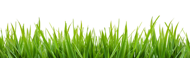 Wall Mural - green grass isolated