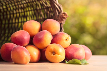 basket with ripe apricots