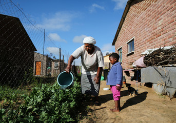 Nyani Moloi waters her spinach plants at the back of her house in the Baken Park township near Bethlehem, South Africa