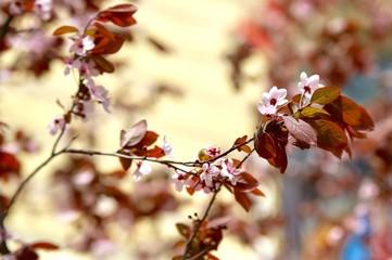 A branch of a flowering ornamental shrub.