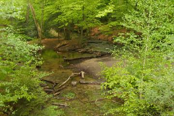 Donoperteich im Teutoburger Wald am Hermannsweg im Frühling und schön grün