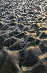 Wet beach mud looks like an endless sea of sand dunes with small bits of green seaweed looking like oasis