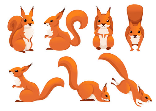 Cute cartoon squirrel set. Funny little brown squirrel collection. Emotion little animal. Cartoon animal character design. Flat vector illustration isolated on white background