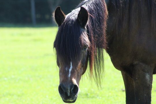 Face of senior horse