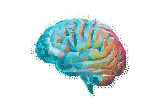 Stylized polygonal brain isolated on white BG
