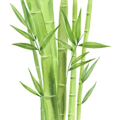 watercolor bamboo stalks
