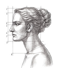 Hand drawn educational illustration, woman's head proportions.