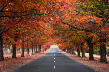 Straight empty view of Honours Avenue at Mount Macedon, Victoria with autumn leaves.