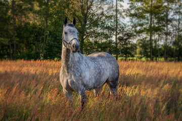 Canvas Prints Horses horse in the field