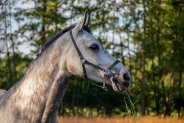 Door stickers Horses horse in the field