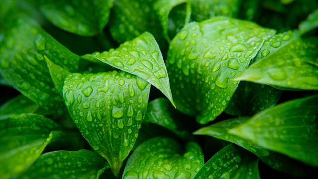 Green foliage of plants covered with raindrops.