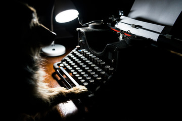 One yorkshire dog writes on an ancient typewriter.