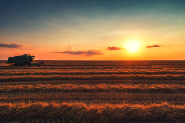 Combine harvester machine working in a wheat field at sunset