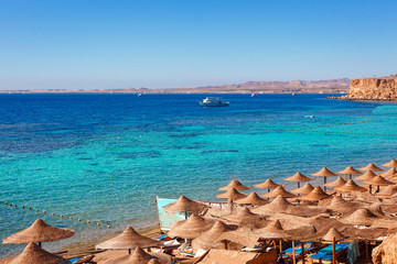 Foto op Canvas Oceanië Sunny resort beach with palm tree at the coast of Red Sea in Sharm el Sheikh, Sinai, Egypt, Asia in summer hot. Сoral reef and crystal clear water. Famous tourist destination diving and snorkeling