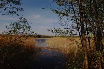 Obraz Poleski Park Narodowy - fototapety do salonu