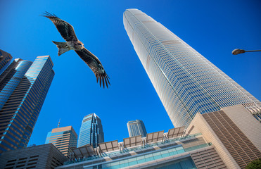 Concept image of a huge hawk flying on top of modern buildings