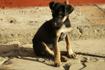 Abandoned puppy asking for help on the street in Brazil