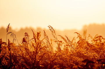 Gräser im Gegenlicht bei Sonnenaufgang Wall mural