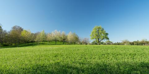 Obstbäume Gebersheim