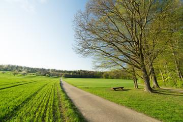 Gebersheim Wald