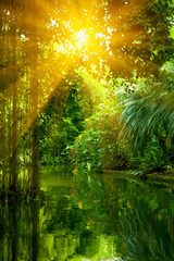 The wild nature. Beautiful landscape of  tropical forest and river under shining sunlight.