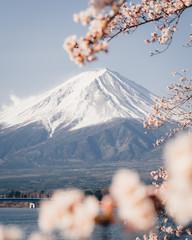 Mount Fuji Japan Sakura Cherry blossoms