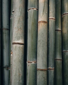 Kyoto Japan Bamboo details