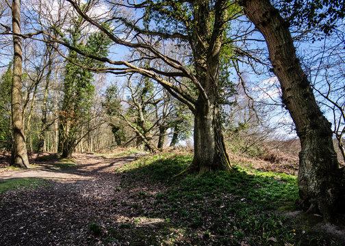 Forest Landscape Hampshire England