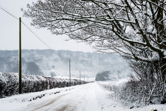 View along a rural road lined with snow-covered trees and hedges, with trees on a hill in distance.,Aston Rowant