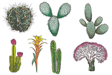 Exotic cactus succulents set. Different cactuses and cacti in color drawing style. Natural hand drawing desert plants. Vector.