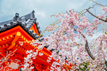 Sanjusangendo Temple with cherry blossoms in Kyoto, Japan