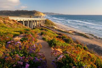 Tuinposter Kust Torrey Pines State Beach, San Diego
