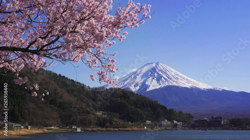 Wall mural Fuji mountains and cherry blossoms in spring, Japan.