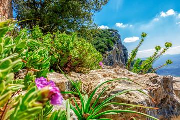 Gebirgsvegetation auf dem Puig d'Alaró (800m)  im Frühling: Zistrose und Euphorbia