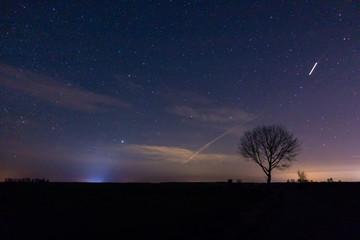 Obraz gwiazdy, drzewo, pole, polana, pojedyncze drzewo, jedno drzewo, pole nocą - fototapety do salonu