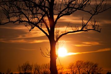 Fototapeta zachód słońca, wschód słońca, słońce, duże słońce, piękny zachód słońca, tapeta, pomarańczowo obraz