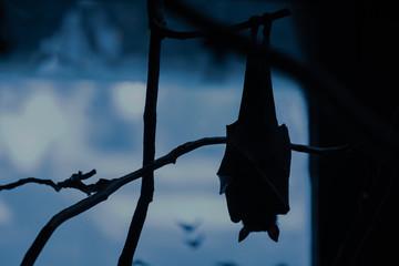 Lyle's flying fox (Pteropus lylei) Bat  silhouette