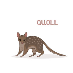 A cartoon cute quoll, isolated on a white background. Animal alphabet.