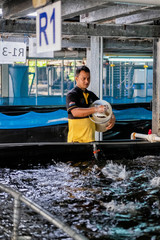 An employee feeds hybrid groupers inside Apollo Aquaculture Group's three-tiered vertical fish farm in northern Singapore