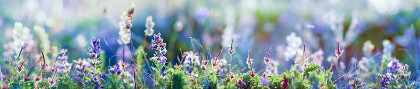 wild flowers and grass closeup, horizontal panorama photo