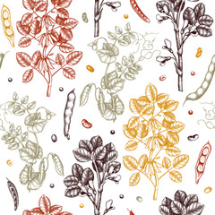 Agricultural legume plants background. Gluten free food seamless pattern. Vector vegetables drawing in engraved style. Hand drawn healthy products design. Great for packaging, menu, label, wrapping.