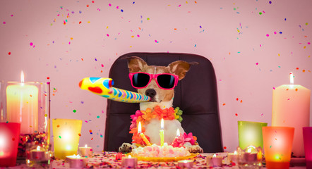 Stores photo Chien de Crazy happy birthday dog
