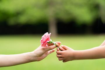 ピンクのカーネーションを手渡す親子の手