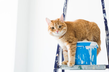 Repair, painting the walls, the cat sits on the stepladder. Funny picture