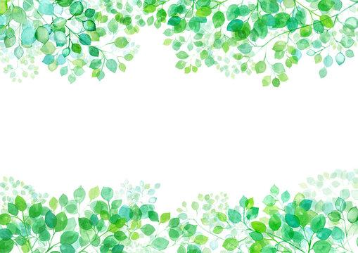 木漏れ日のフレームデザイン。新緑の枝葉の水彩イラスト。