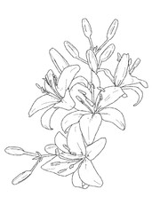 Flowers sketch black and white